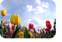 写真:花畑